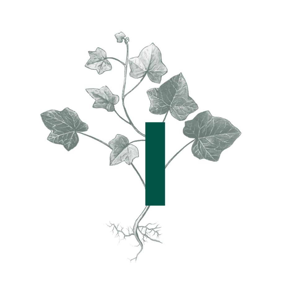 Ivy Paysagiste